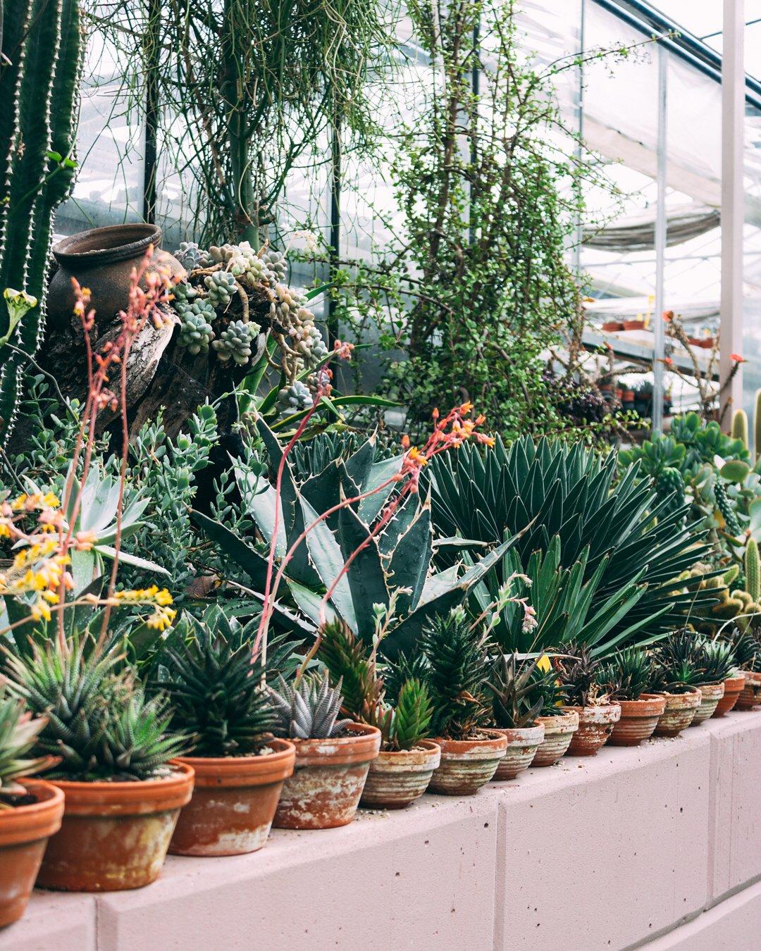Volite biljke i zelenilo? Zanimat će vas ideja 'Zelenog adventa'